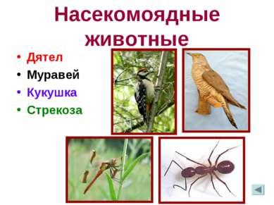 Насекомоядные животные Дятел Муравей Кукушка Стрекоза