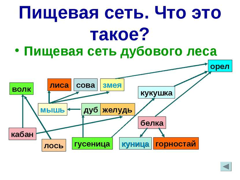 Пищевая сеть. Что это такое? Пищевая сеть дубового леса