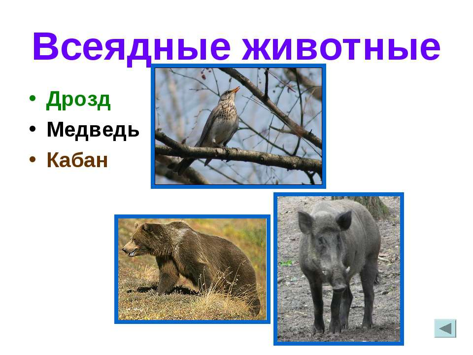 Всеядные животные Дрозд Медведь Кабан