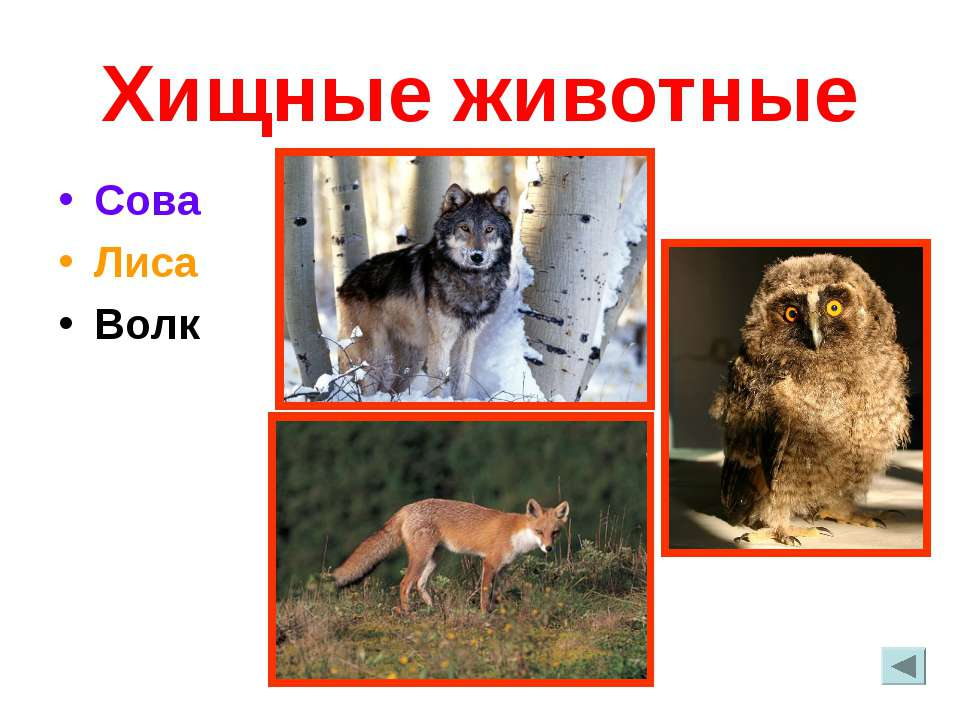 Хищные животные Сова Лиса Волк