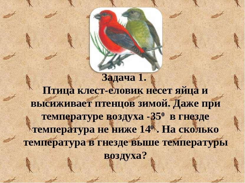 Задача 1. Птица клест-еловик несет яйца и высиживает птенцов зимой. Даже при ...