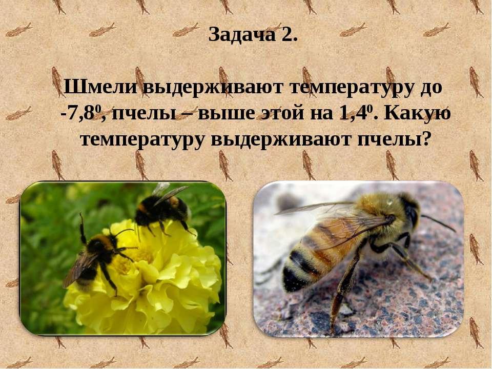 Задача 2. Шмели выдерживают температуру до -7,80, пчелы – выше этой на 1,40. ...