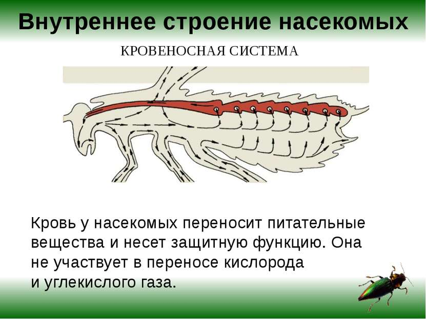 Кровь унасекомых переносит питательные вещества инесет защитную функцию. Он...