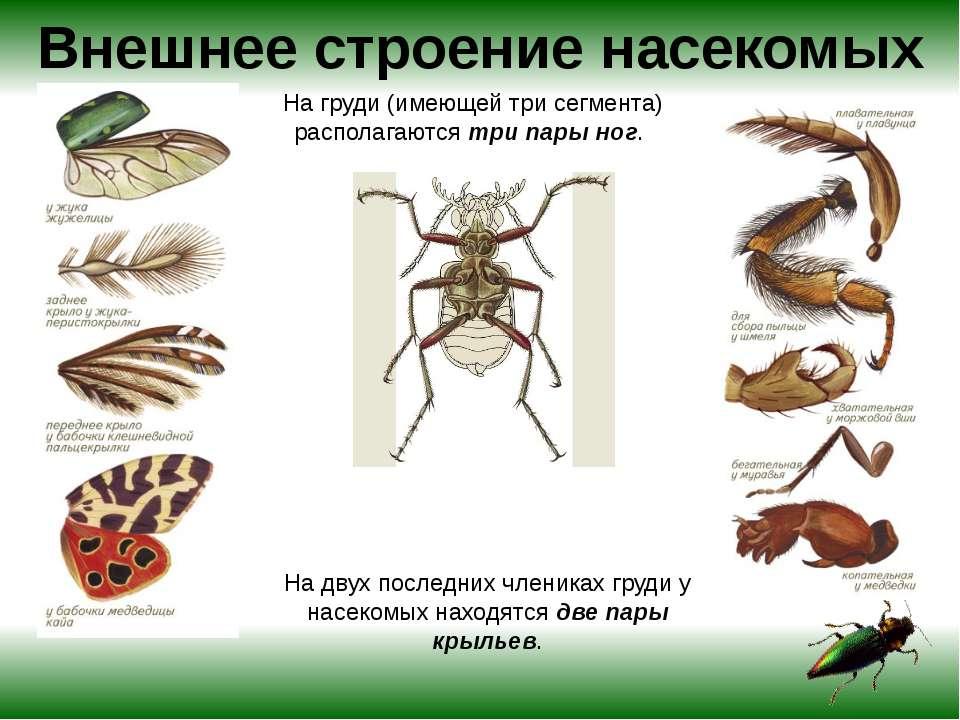 паразиты живущие голове человека