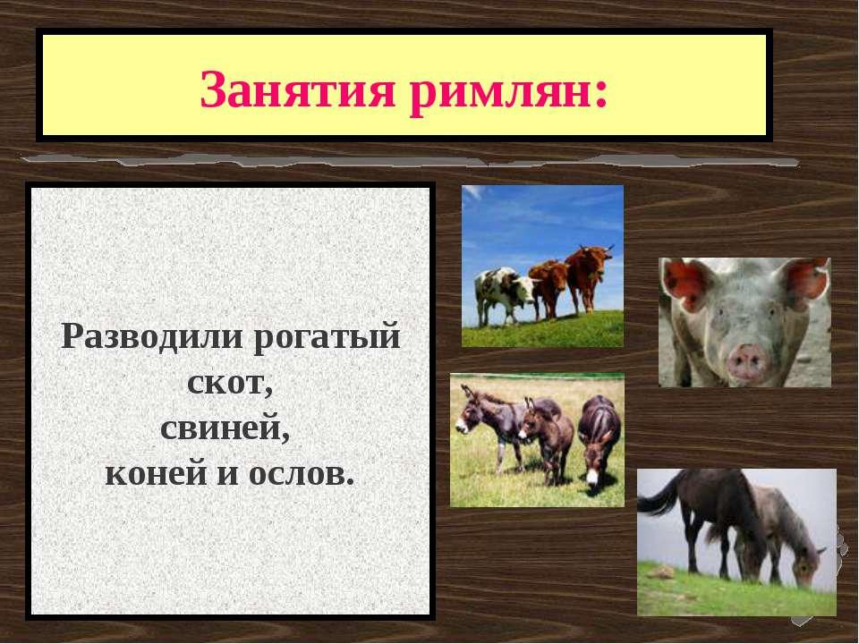 Занятия римлян: Разводили рогатый скот, свиней, коней и ослов.