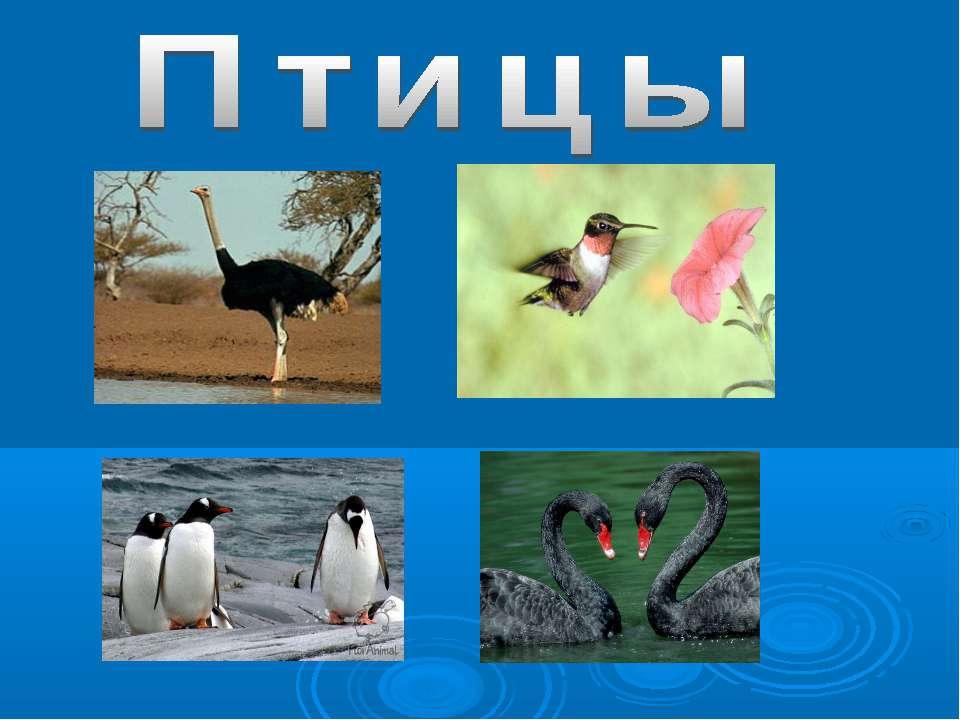 Презентация По Тему Мигрирующих Птиц