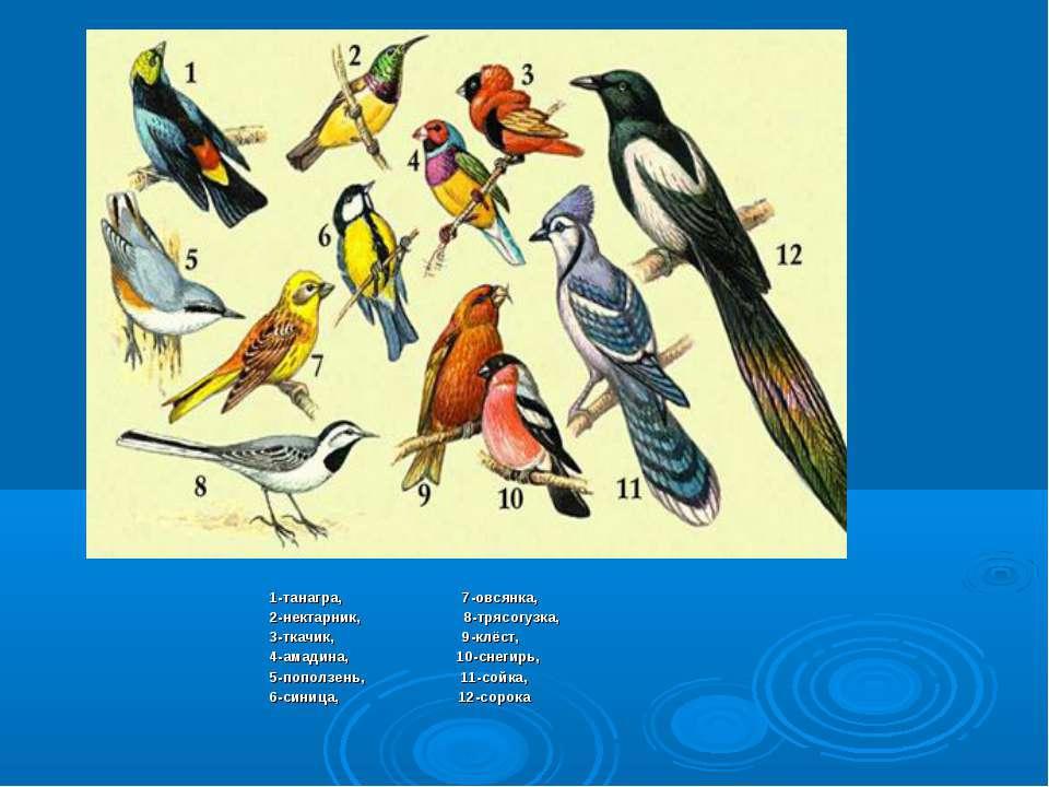 1-танагра, 7-овсянка, 2-нектарник, 8-трясогузка, 3-ткачик, 9-клёст, 4-амадина...
