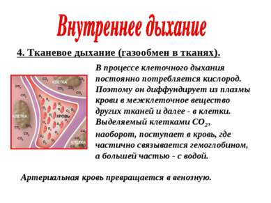 4. Тканевое дыхание (газообмен в тканях). В процессе клеточного дыхания посто...