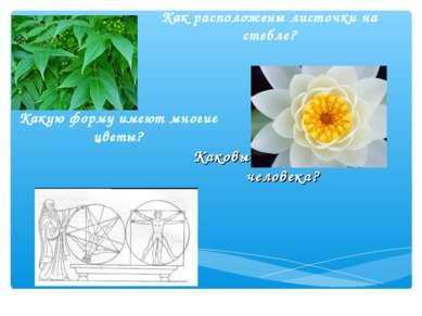 Каковы пропорции тела человека? Какую форму имеют многие цветы? Как расположе...