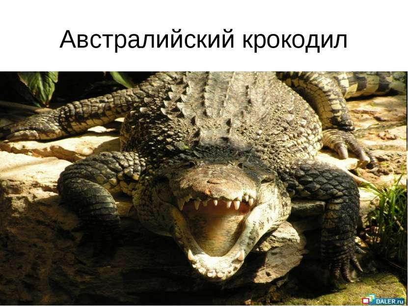 Австралийский крокодил
