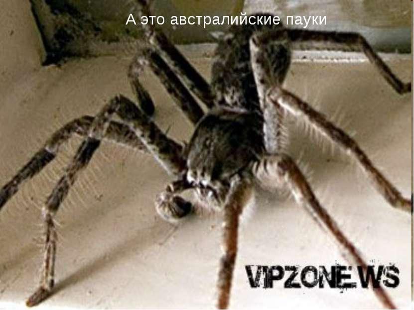 А это австралийские пауки
