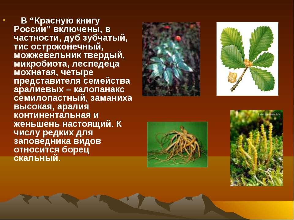 """В """"Красную книгу России"""" включены, в частности, дуб зубчатый, тис остроконечн..."""