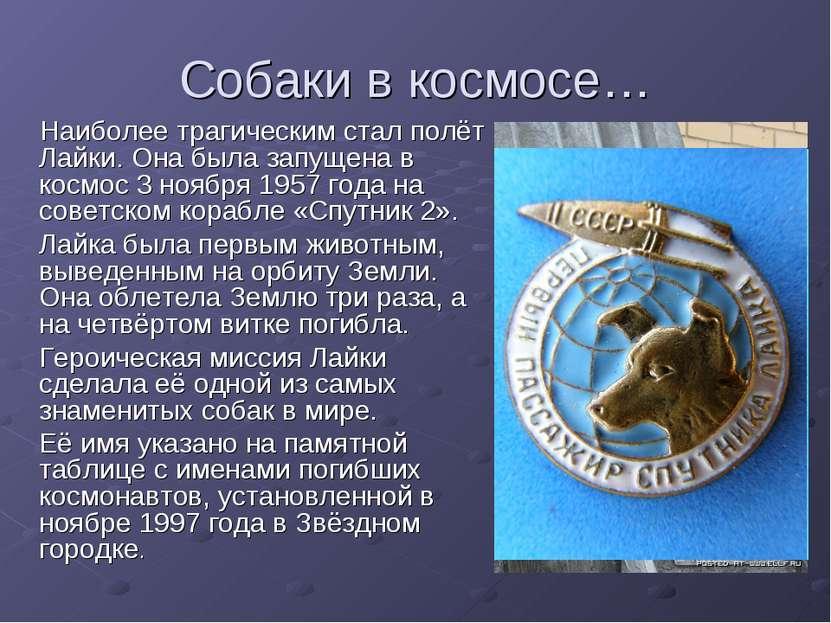 Собаки в космосе… Наиболее трагическим стал полёт Лайки. Она была запущена в ...