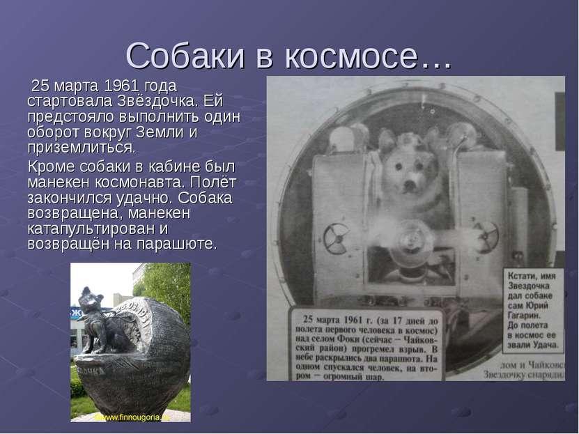 Собаки в космосе… 25 марта 1961 года стартовала Звёздочка. Ей предстояло выпо...