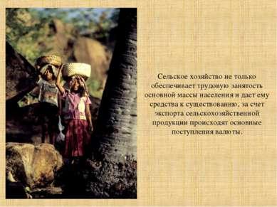 Сельское хозяйство не только обеспечивает трудовую занятость основной массы н...
