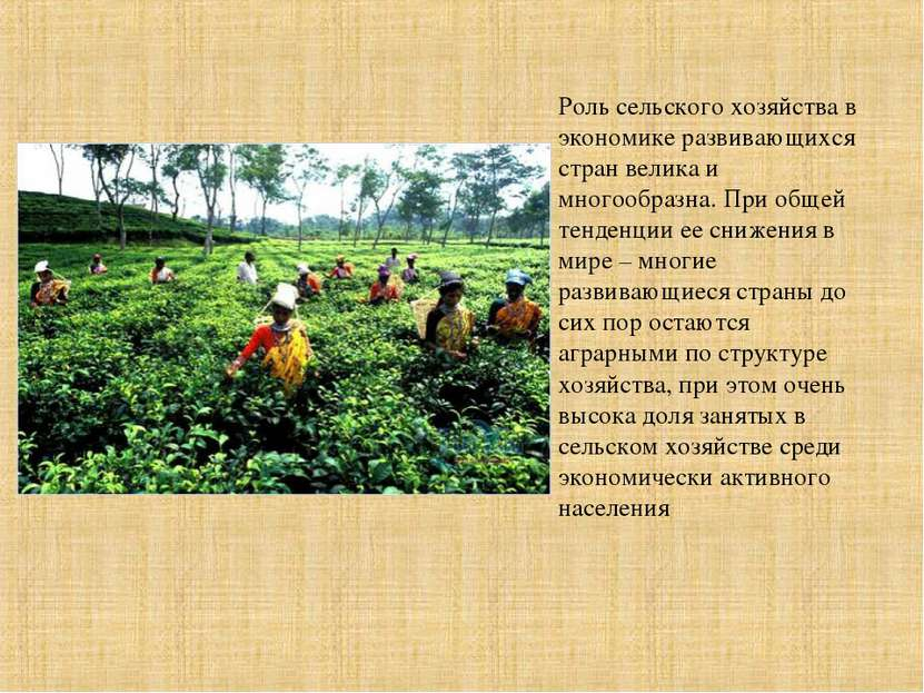Роль сельского хозяйства в экономике развивающихся стран велика и многообразн...