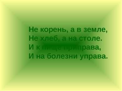 Не корень, а в земле, Не хлеб, а на столе. И к пище приправа, И на болезни уп...