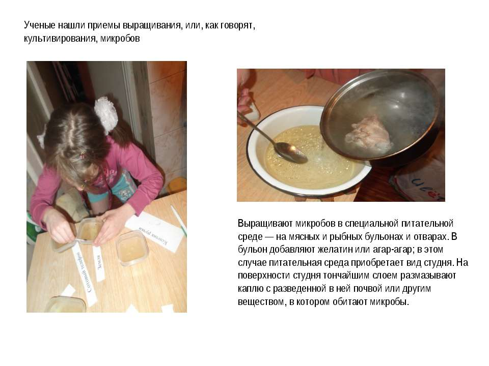 Выращивание бактерий в домашних условиях 96