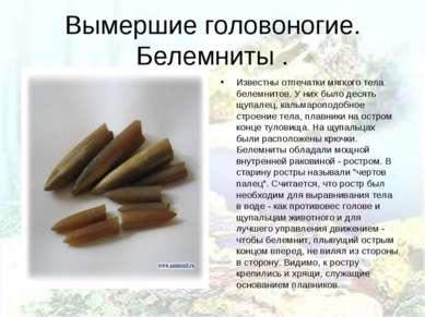 Вымершие головоногие. Белемниты . Известны отпечатки мягкого тела белемнитов....