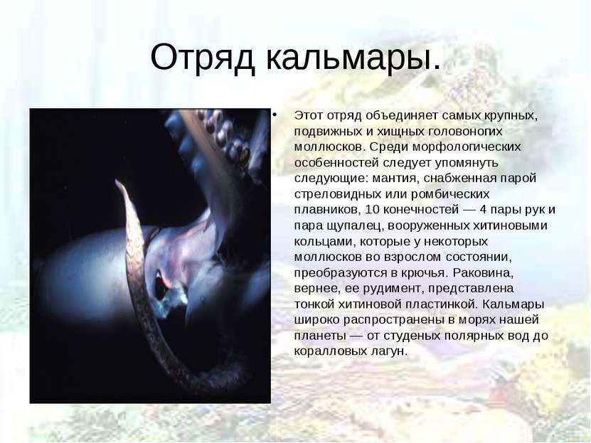 Отряд кальмары. Этот отряд объединяет самых крупных, подвижных и хищных голов...