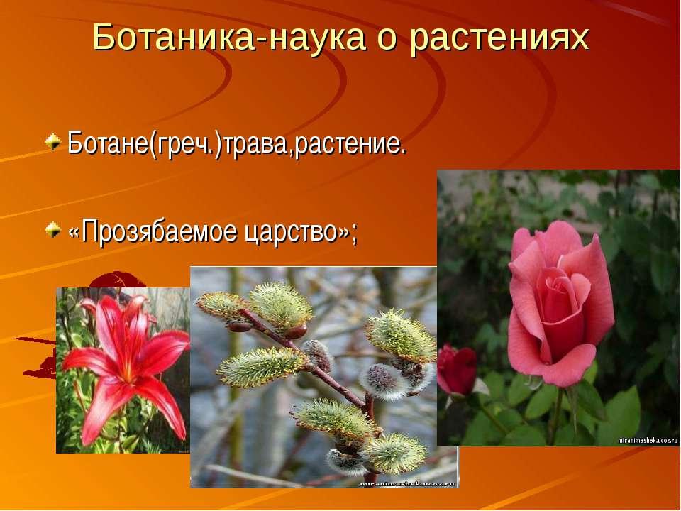 Ботаника-наука о растениях Ботане(греч.)трава,растение. «Прозябаемое царство»;