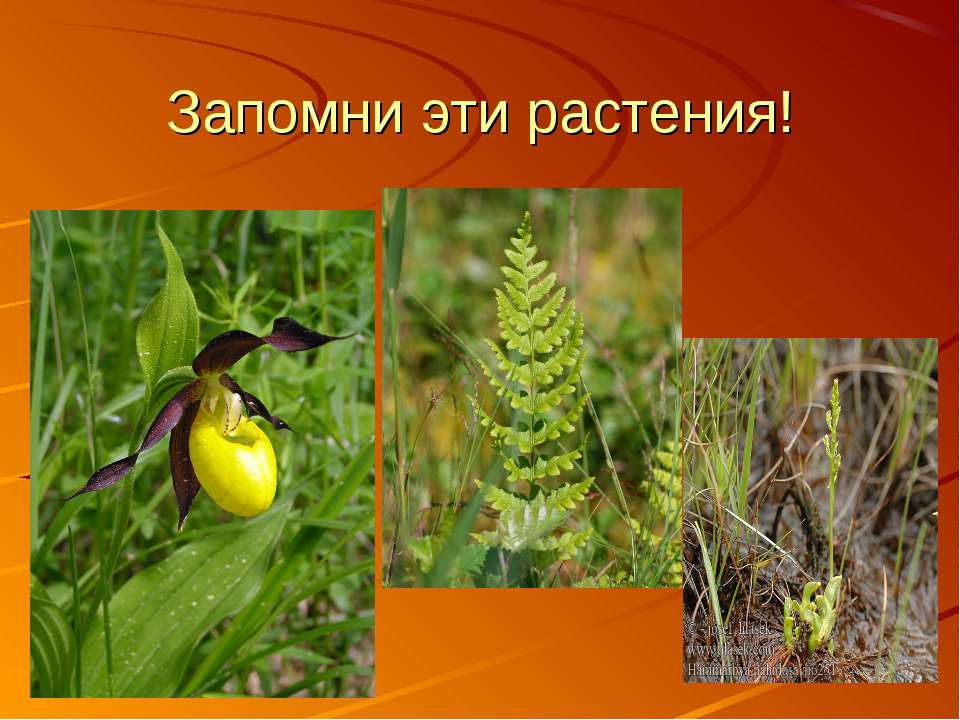 Запомни эти растения!