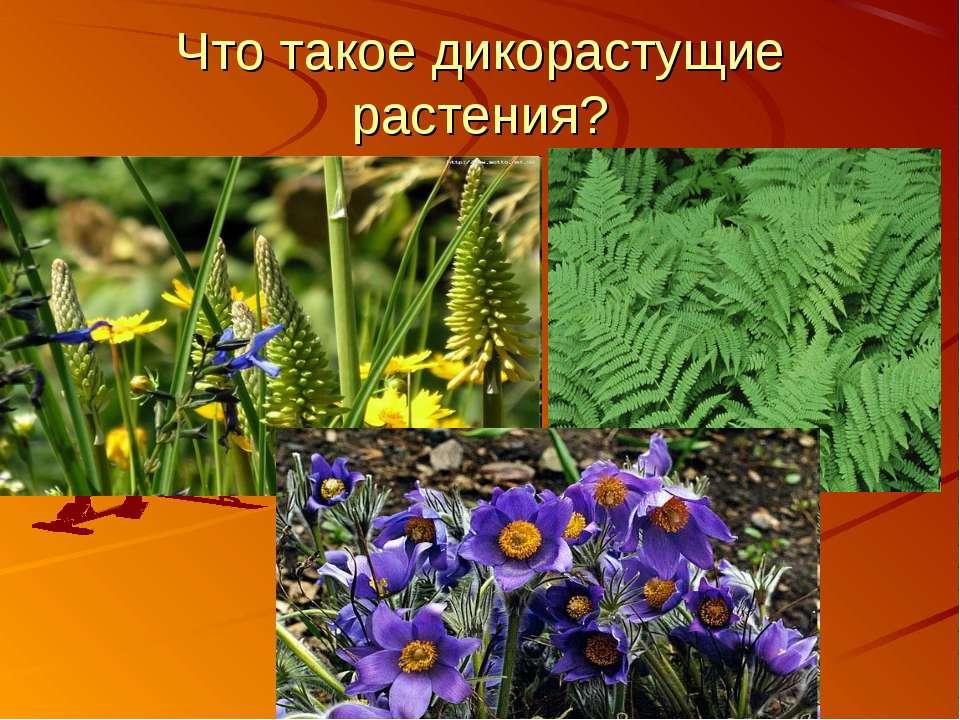 Что такое дикорастущие растения?