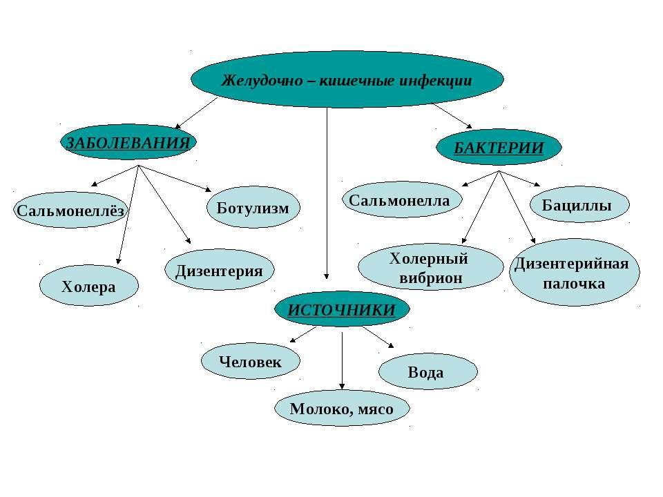 Желудочно – кишечные инфекции ЗАБОЛЕВАНИЯ Сальмонеллёз Холера Дизентерия Боту...