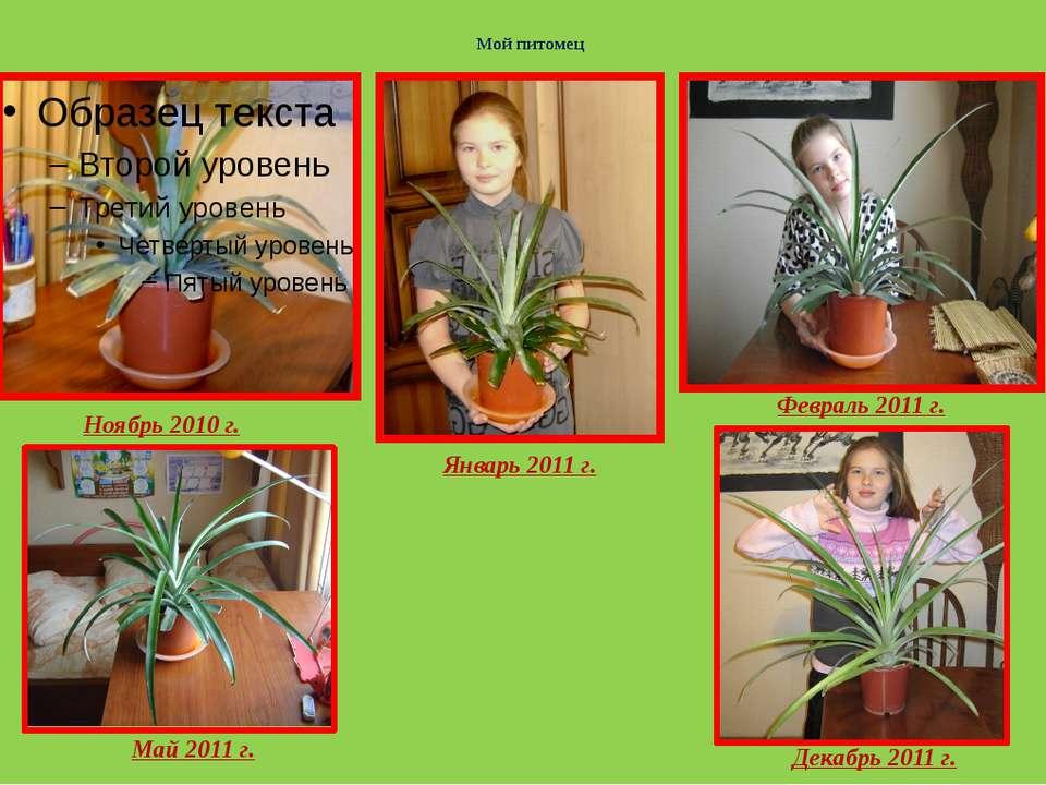 Мой питомец Ноябрь 2010 г. Февраль 2011 г. Январь 2011 г. Май 2011 г. Декабрь...