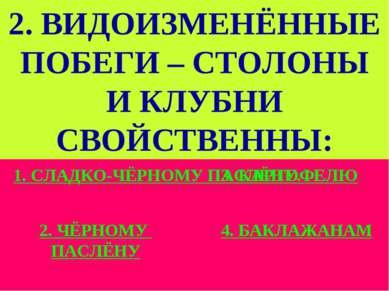 2. ВИДОИЗМЕНЁННЫЕ ПОБЕГИ – СТОЛОНЫ И КЛУБНИ СВОЙСТВЕННЫ: 1. СЛАДКО-ЧЁРНОМУ ПА...