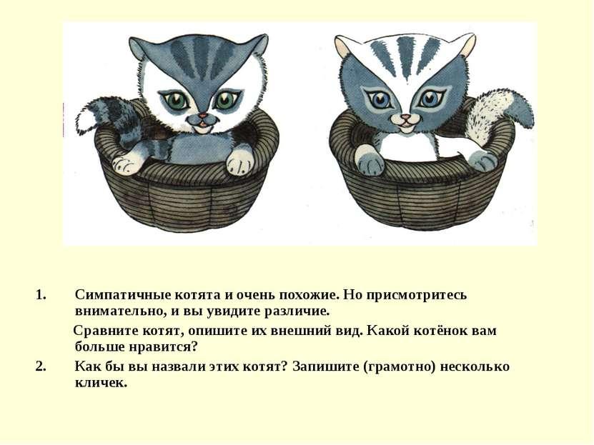 Симпатичные котята и очень похожие. Но присмотритесь внимательно, и вы увидит...
