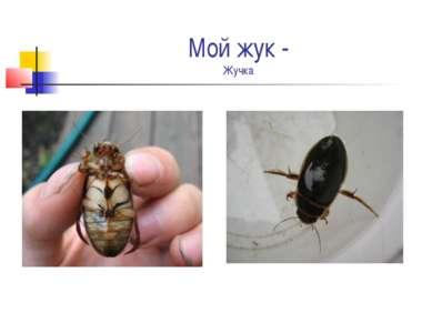 Мой жук - Жучка