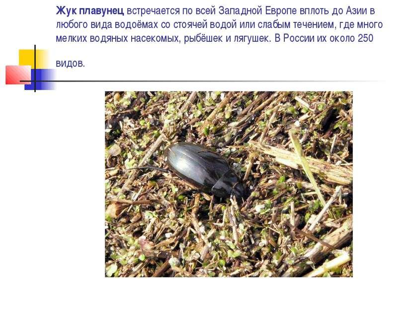 Жук плавунец встречается по всей Западной Европе вплоть до Азии в любого вида...