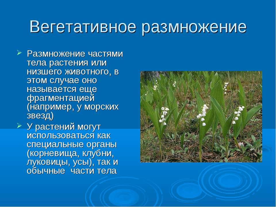 Вегетативное размножение Размножение частями тела растения или низшего животн...