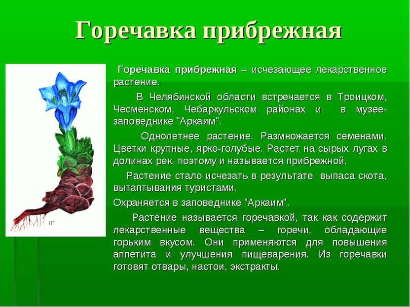 Горечавка прибрежная Горечавка прибрежная – исчезающее лекарственное растение...