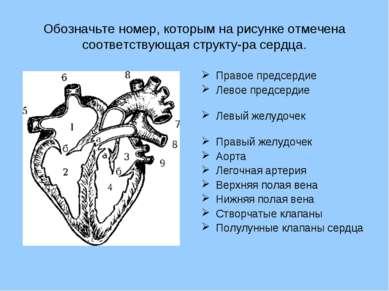 Обозначьте номер, которым на рисунке отмечена соответствующая структу ра серд...