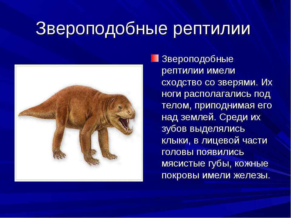 Звероподобные рептилии Звероподобные рептилии имели сходство со зверями. Их н...