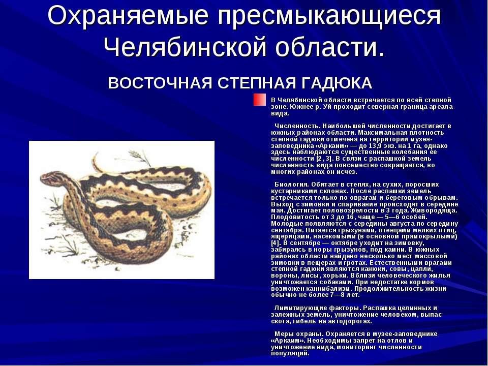 Охраняемые пресмыкающиеся Челябинской области. ВОСТОЧНАЯ СТЕПНАЯ ГАДЮКА В Чел...
