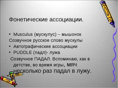 Фонетические ассоциации. Musculus (мускулус) – мышонок Созвучное русское слов...