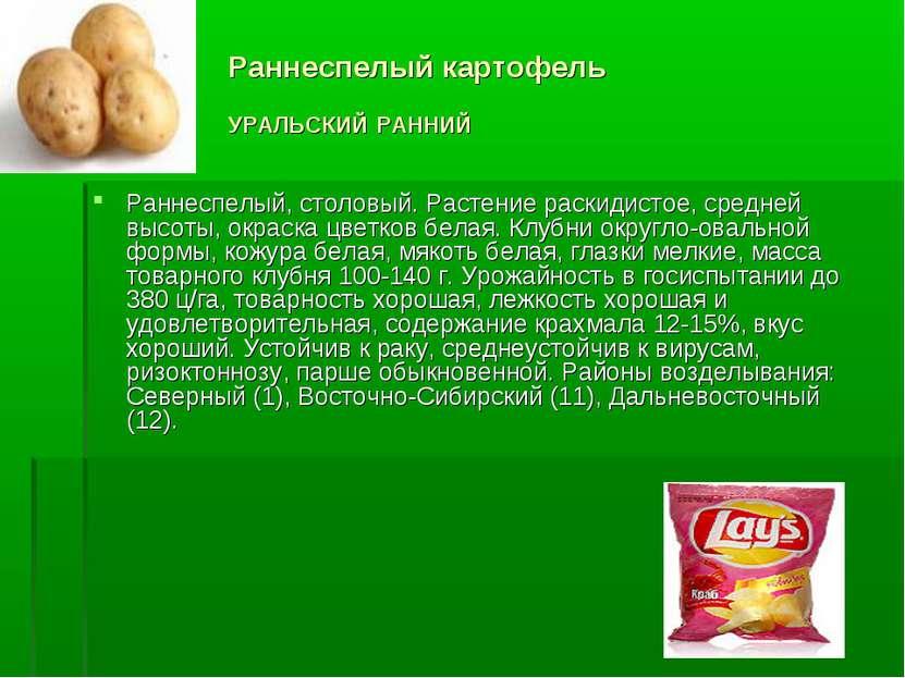 Раннеспелый картофель УРАЛЬСКИЙ РАННИЙ Раннеспелый, столовый. Растение раскид...