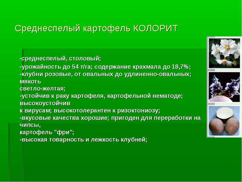 Среднеспелый картофель КОЛОРИТ -среднеспелый, столовый; -урожайность до 54 т/...
