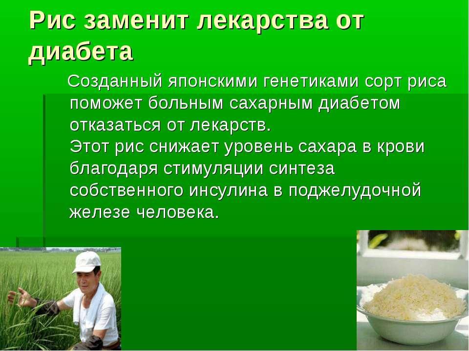 Рис заменит лекарства от диабета Созданный японскими генетиками сорт риса пом...