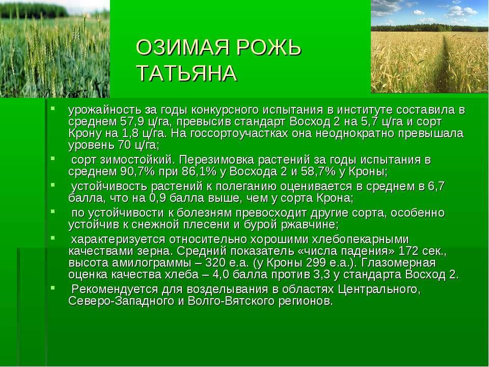 ОЗИМАЯ РОЖЬ ТАТЬЯНА урожайность за годы конкурсного испытания в институте сос...