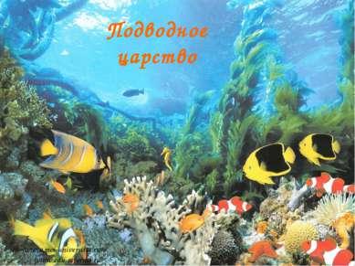 Подводное царство www.moi-universitet.ru www.edu-reforma.ru