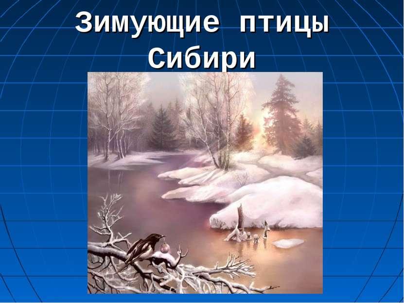 Зимующие птицы Сибири