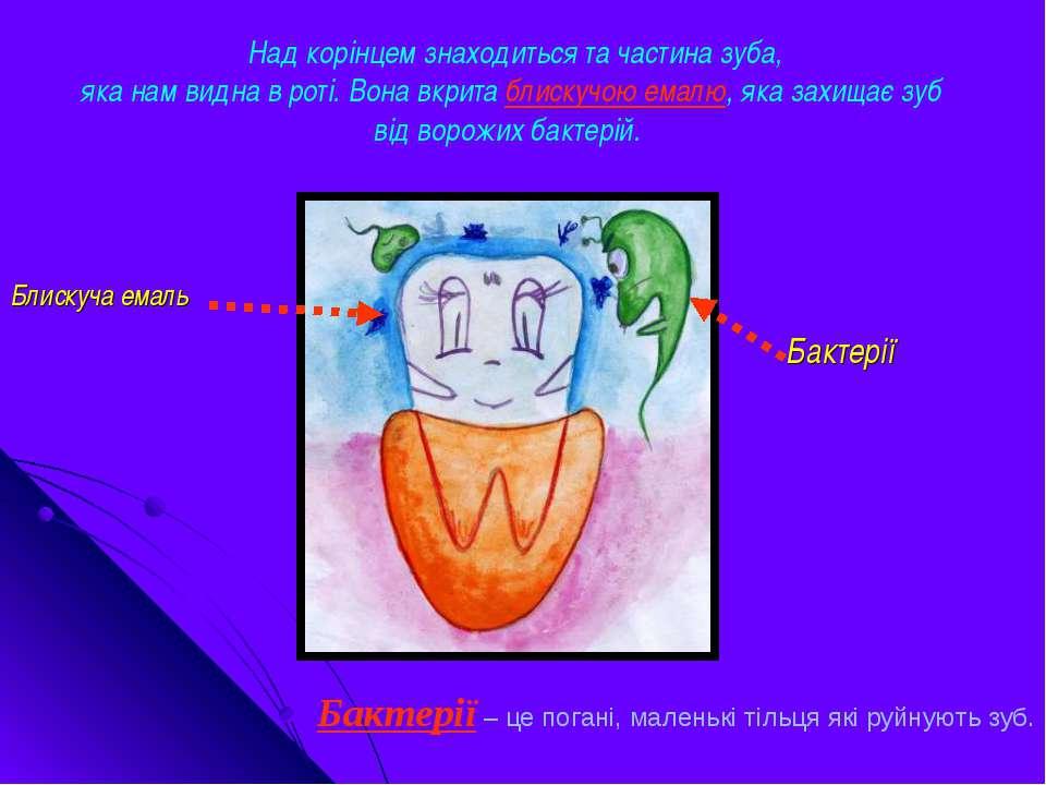 Над корінцем знаходиться та частина зуба, яка нам видна в роті. Вона вкрита б...