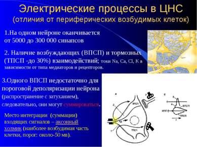 Электрические процессы в ЦНС (отличия от периферических возбудимых клеток) 1....