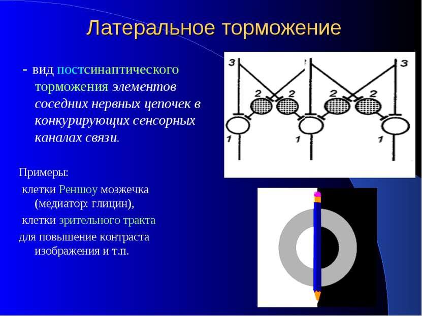 Латеральное торможение - вид постсинаптического торможения элементов соседних...
