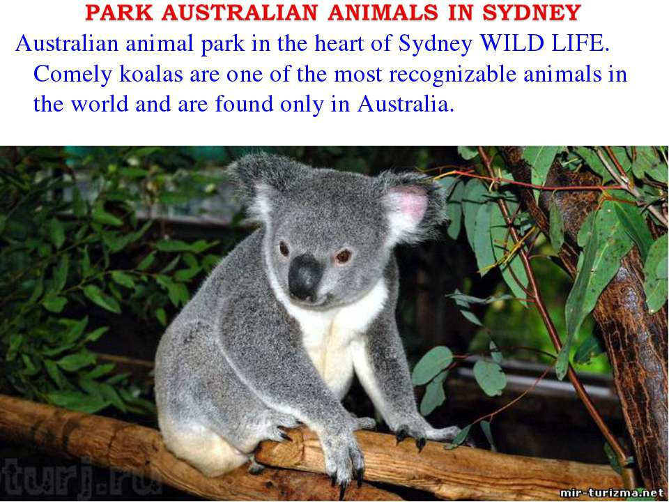 Australian animal park in the heart of Sydney WILD LIFE. Comely koalas are on...