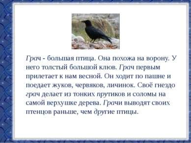 Грач - большая птица. Она похожа на ворону. У него толстый большой клюв. Грач...